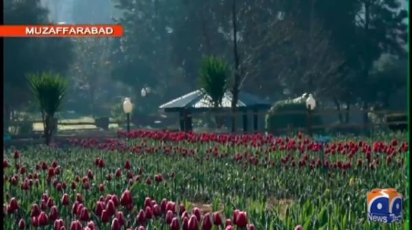 Tulip garden established in Muzaffarabad
