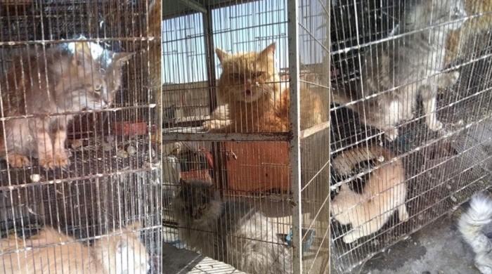 Karachi's shuttered Empress Market echoes of wailing animals amid lockdown