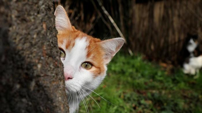 Cats susceptible to coronavirus, says study, prompts WHO to probe