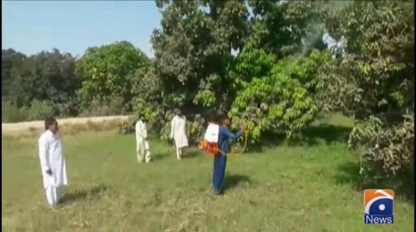 Surveys and operations being conducted to eradicate locusts