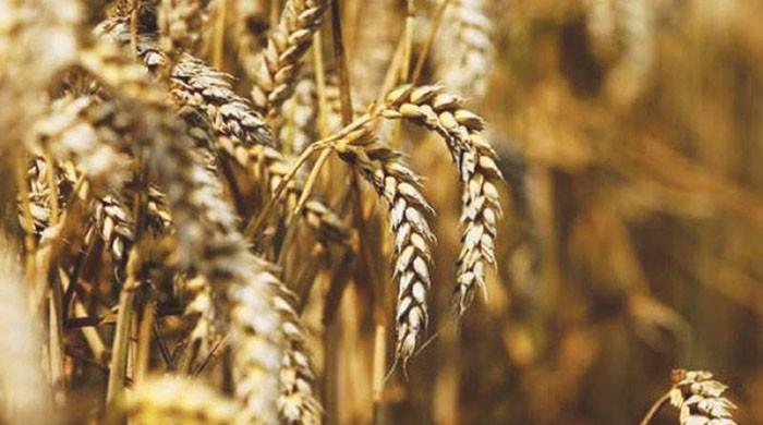 ECC gives go-ahead to private sector for import of 2.5 million tons of wheat