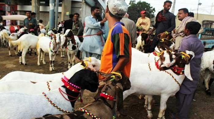 NCOC formulates SOPs for nearly 700 cattle markets across country ahead of Eid-ul-Azha