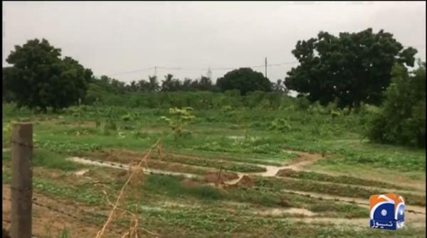 Karachi: Owners of agricultural land in Malir are happy with recent rains