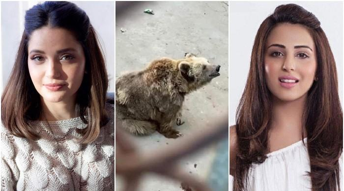 Ushna Shah, Armeena Khan call out Karachi Zoo over mistreatment of viral bear