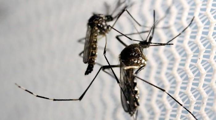 Dengue cases on the rise in Karachi: report