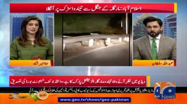Islamabad: Margala ke Jungle se Tendwa Sarak par aanikla