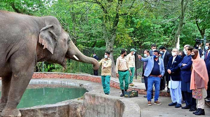 President Alvi says goodbye to Kaavan as he leaves for Cambodia
