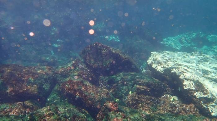 WWF-Pakistan warns fragile corals face threat of bleaching in Pakistan