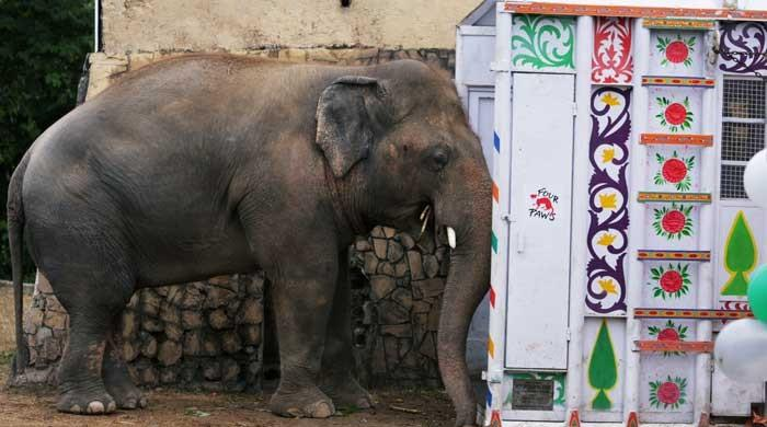 Here's how the 'world's loneliest elephant' Kaavan will travel to Cambodia