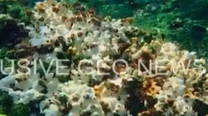 Climate emergency: Karachiites urged to act as coral bleaching threatens marine life