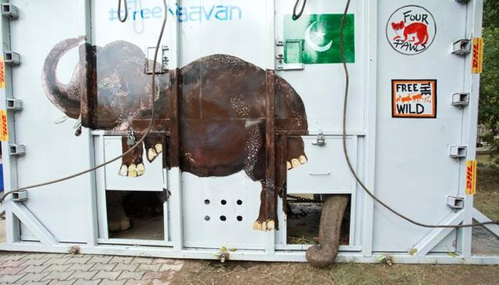 Kaavan pokes his trunk out of a crate carrying him for his departure to Cambodia in Islamabad, Pakistan, November 30, 2020. REUTERS/Saiyna Bashir