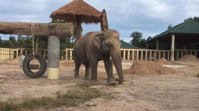 In pictures: Kaavan explores new home in Cambodia, makes contact with another elephant