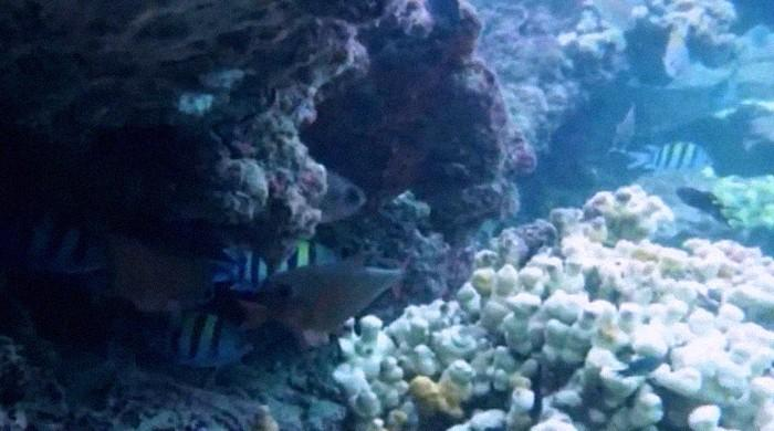 BEPA launches comprehensive research, probe into coral bleaching near Churna Island