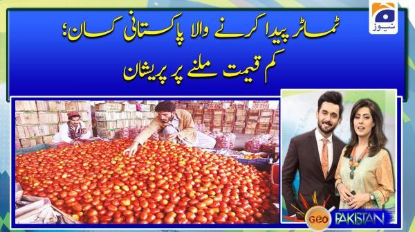 ٹماٹر پیدا کرنے والا پاکستانی کسان؛ کم قیمت ملنے پر پریشان