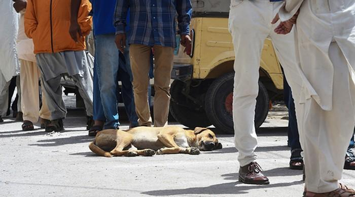 MPAs to be suspended if dog-bite incidents take place in their areas, rules SHC