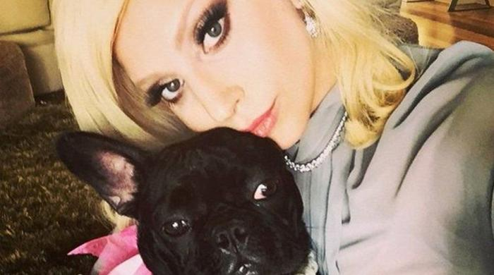 Lady Gaga's dogs safely recovered after armed theft