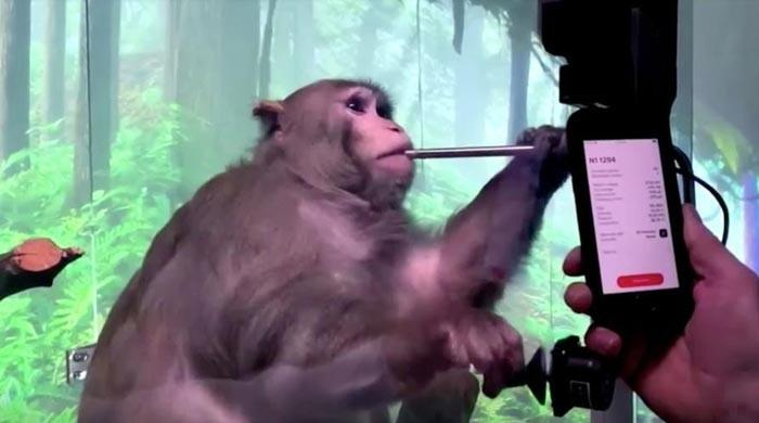 Monkey with brain-chip enjoys video game by thinking via Elon Musk's Neuralink