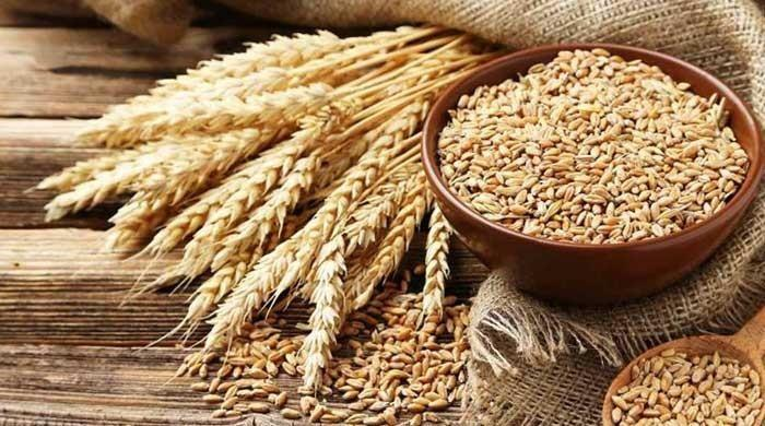 Wheat production to hit new record this year in Pakistan