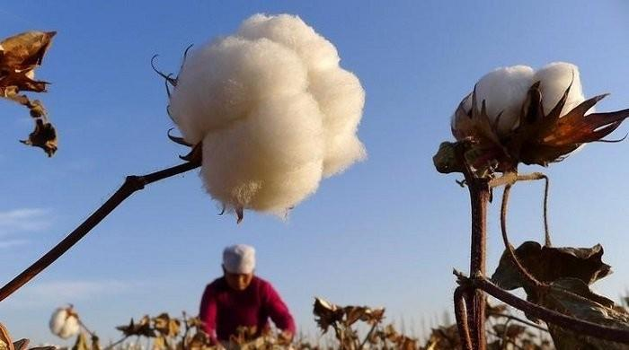 Customs duty on cotton yarn imports removed by ECC