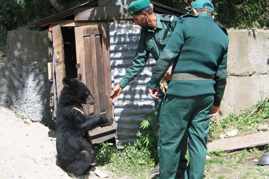 Wildlife watchers, feed one of two Asian black bears, rescued a year ago near the Line of Control (LoC), at the Wildlife and Fisheries department in a Dawarian village in Neelum Valley, Azad Jammu and Kashmir, June 12, 2021. — Reuters/Abu Arqam Naqash