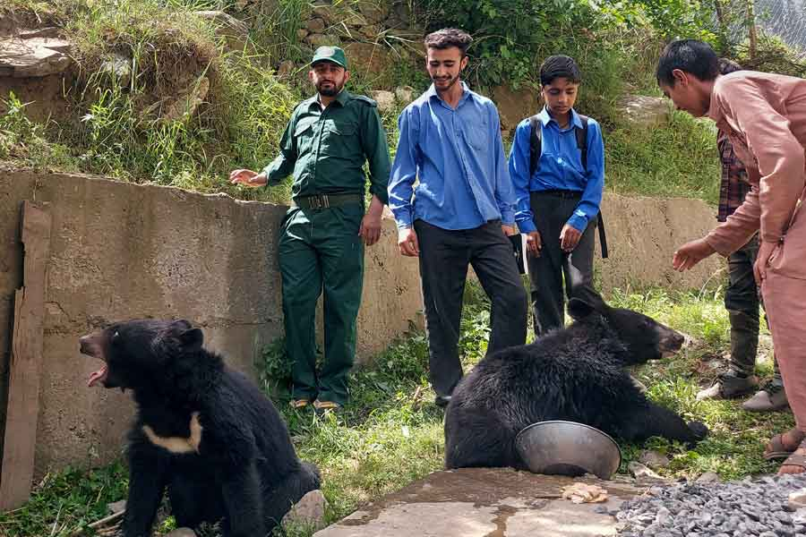Students and residents play with a pair of Asian black bears, rescued a year ago near the Line of Control (LoC), at the Wildlife and Fisheries department in a Dawarian village in Neelum Valley, Azad Jammu and Kashmir, June 12, 2021. — Reuters/Abu Arqam Naqash