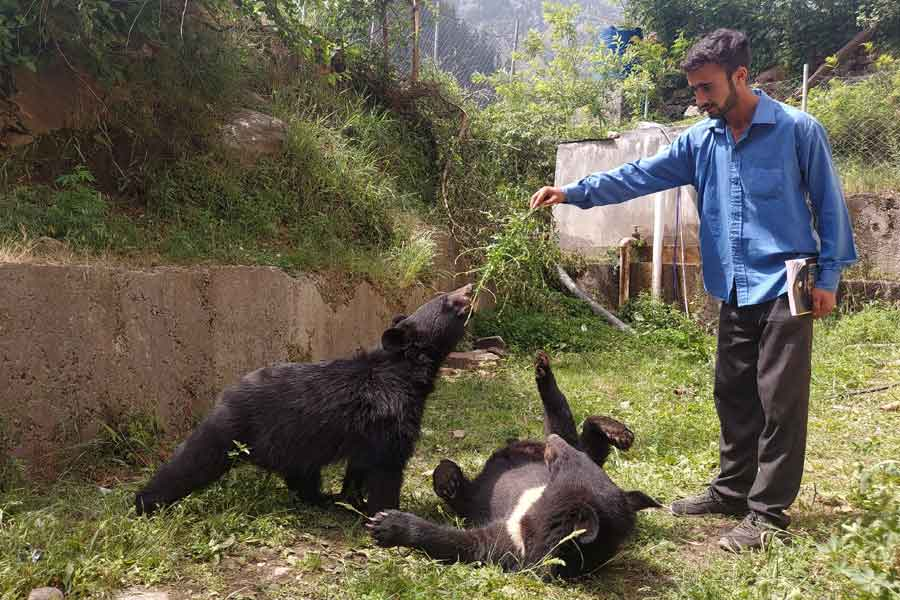 A student plays with a pair of Asian black bears, rescued a year ago near the Line of Control (LoC), at the Wildlife and Fisheries department in a Dawarian village in Neelum Valley, Azad Jammu and Kashmir, June 12, 2021. — Reuters/Abu Arqam Naqash