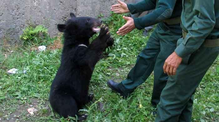 Orphaned Asiatic bear cubs given shelter near Pakistan-India border