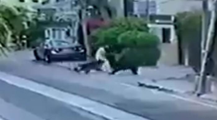Video: Karachi man attacked by pet dogs in DHA Phase 6