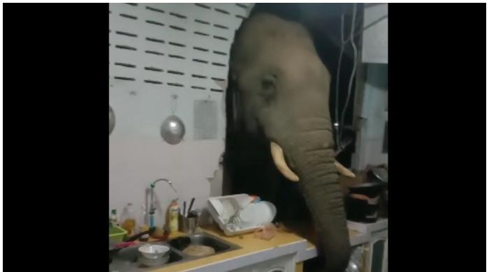 WATCH: Elephant rummages through Thai family's kitchen at night