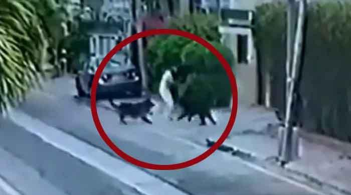 Karachi court orders arrest of owner of pet dogs who attacked lawyer