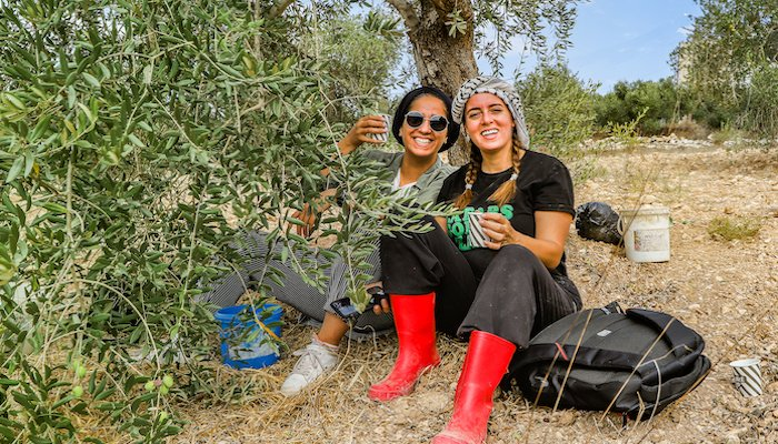 Travel bloggers Malak Hassan and Bisan Alhajhasan visit the village of Burin near Nablus to help out in the olive harvest season. Photo: Courtesy Ahlan Palestine