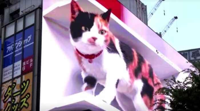 WATCH: Giant 3D cat on Tokyo billboard dazzles passersby