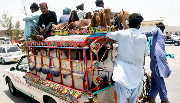 A large number of animals can be seen at the weekly animal market ahead of Eidul Adha in Hyderabad, on July 7, 2021. — INP