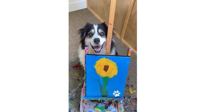 Incredible dog that can paint wows the internet