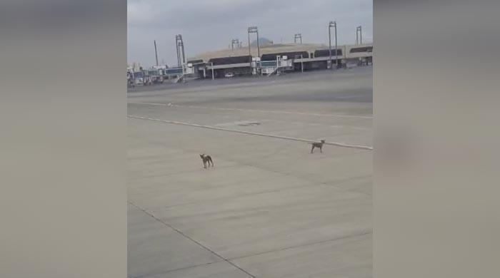 WATCH: Stray dogs make way to Karachi airport's runway