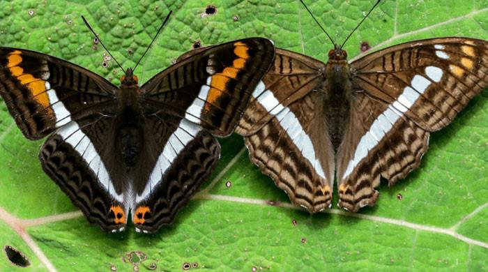 Colombian photographer documents world´s largest variety of butterflies