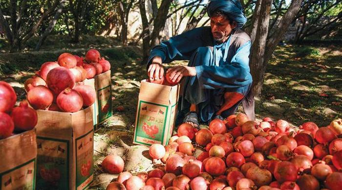 Pakistan waives off sales tax on import of fruits from Afghanistan