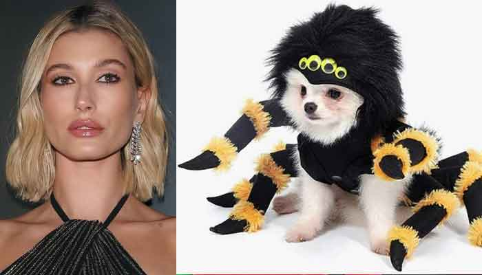 Hailey Bieber shares cutest photo of her dog wearing a huge spider costume
